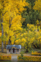 2016,New Zealand,april,arrowtown,autumn,building,cabin,fall,otago,portrait,south island,southern,vertical
