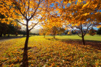 2016,New Zealand,april,arrowtown,autumn,fall,golf course,otago,south island,southern