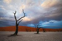 2012, africa, african, dead tree, deadvlei, desert, forest, horizontal, namibia, namibian, sand, tree