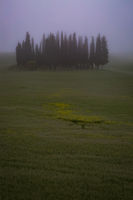 Foggy Tuscany Morning
