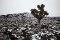 america,cactus,california,death valley,death valley national park,inyo forest,inyo national forest,joshua tree,north america,snow,united states,us,usa,west