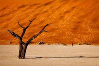 africa,african,dead tree,deadvlei,desert,forest,horizontal,namibia,namibian,sand,tree,woods