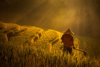 asia,bali,belimbing,east java,farmer,field,indonesia,java,male,man,morning,mountain,old,rice,rice terrace,tabanan