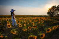 europe,female,flower,france,horizontal,lady,looking,southern,sunflower,valensole,woman,yellow