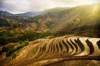 3,asia,china,gold,green,hill,horizontal,longji,longji rice terraces,longji viewpoint 3,longsheng,mountain,planting season,rice terrace,terrace,three,v