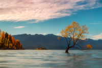 april,evening,fall,south island,sunset,trees,wanaka,wanaka lake