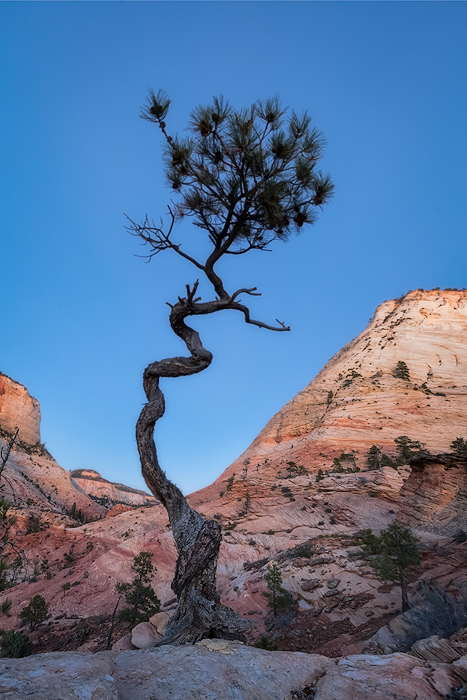 canyon,checkerboard mesa,evening,fall,landscape,north america,southwest,tree,twilight,united states,utah,zion national park