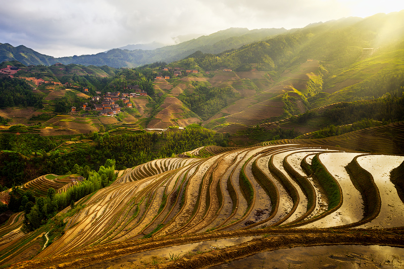 3,asia,china,gold,green,hill,horizontal,longji,longji rice terraces,longji viewpoint 3,longsheng,mountain,planting season,rice terrace,terrace,three,v