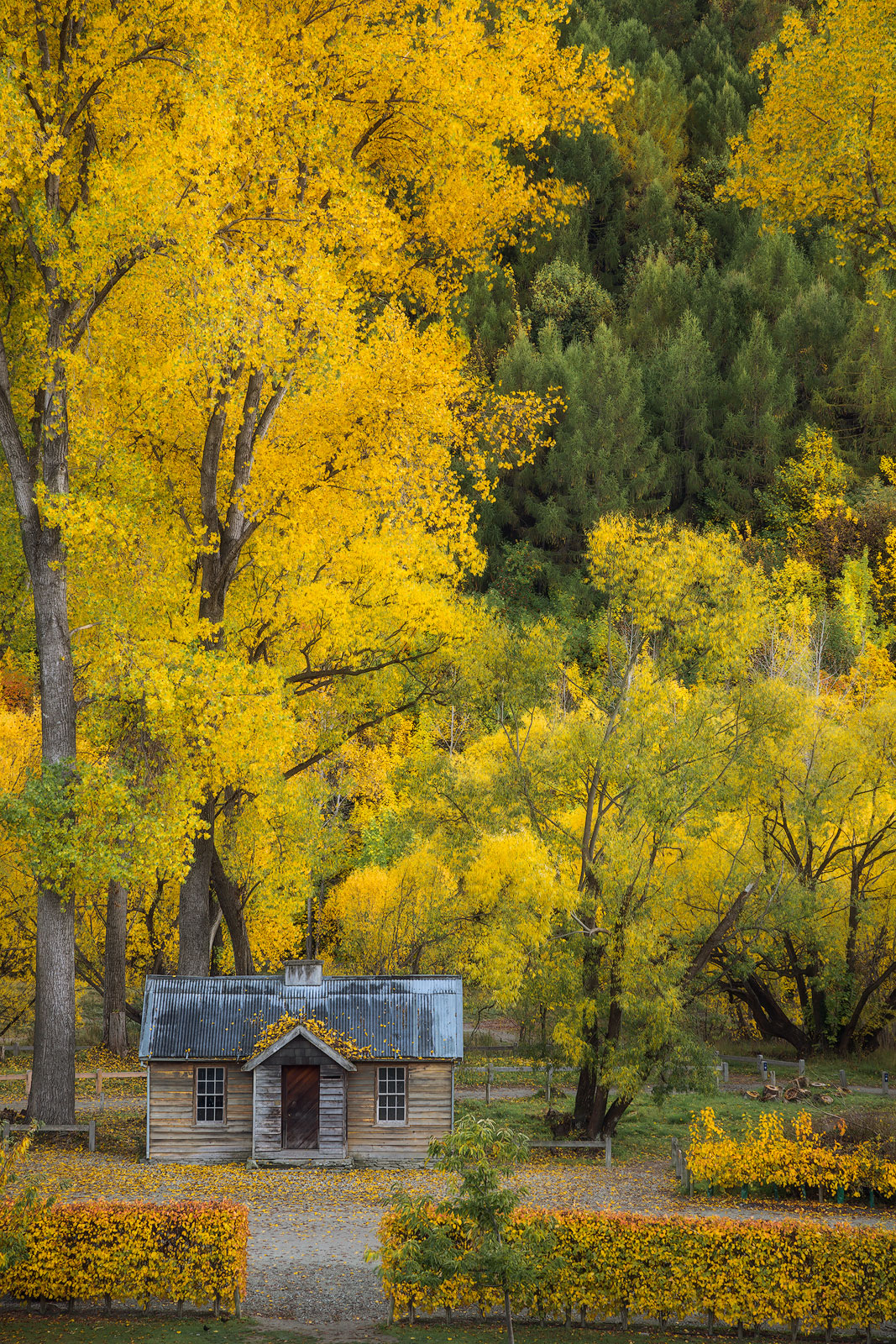 2016,New Zealand,april,arrowtown,autumn,building,cabin,fall,otago,portrait,south island,southern,vertical, photo