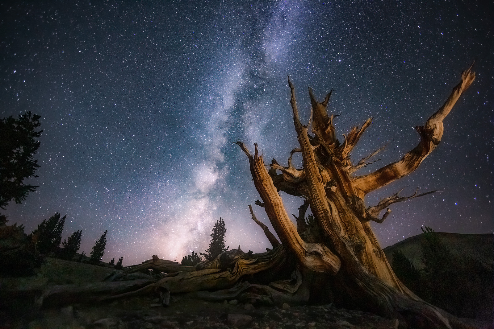 ancient,bristlecone,pine,tree,forest,milky way,california,night photography,light painting,stars