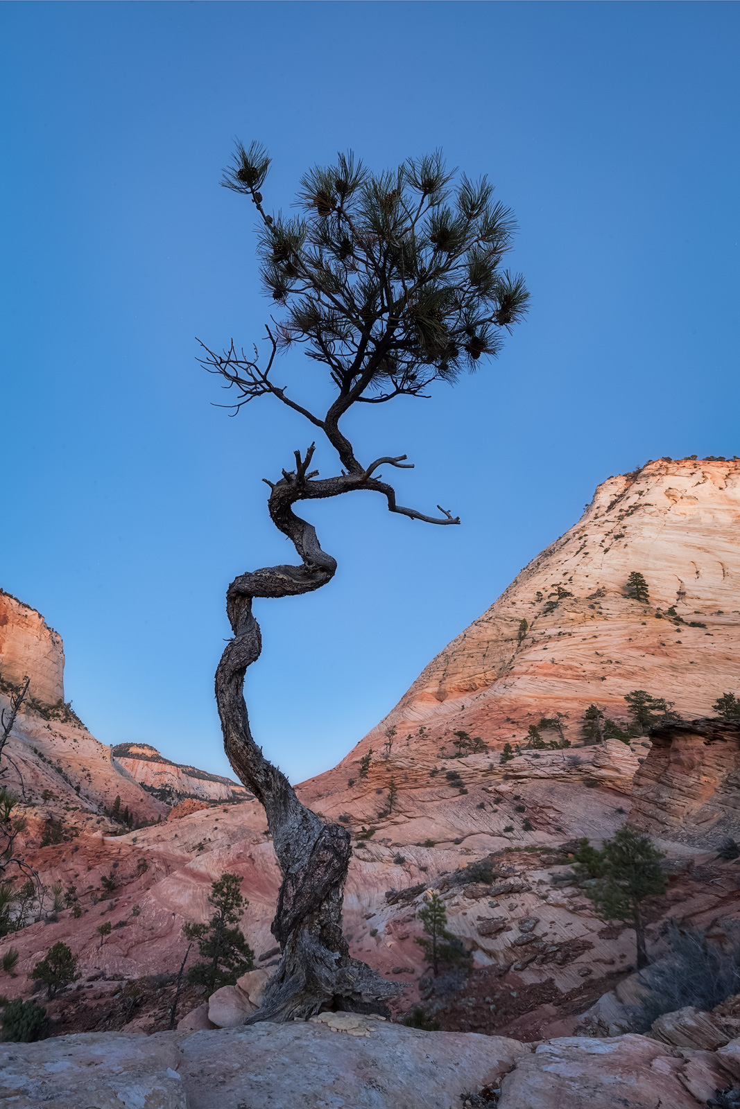 A lone tree in front of a mountain valley at twilight.