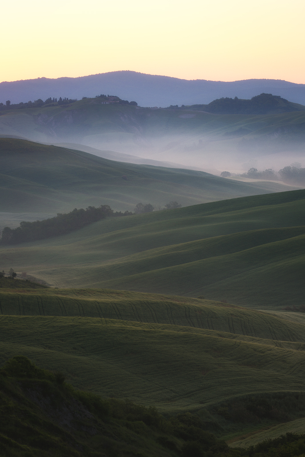 Close-up of Tuscany's hillls at sunrise with fog rolling through.