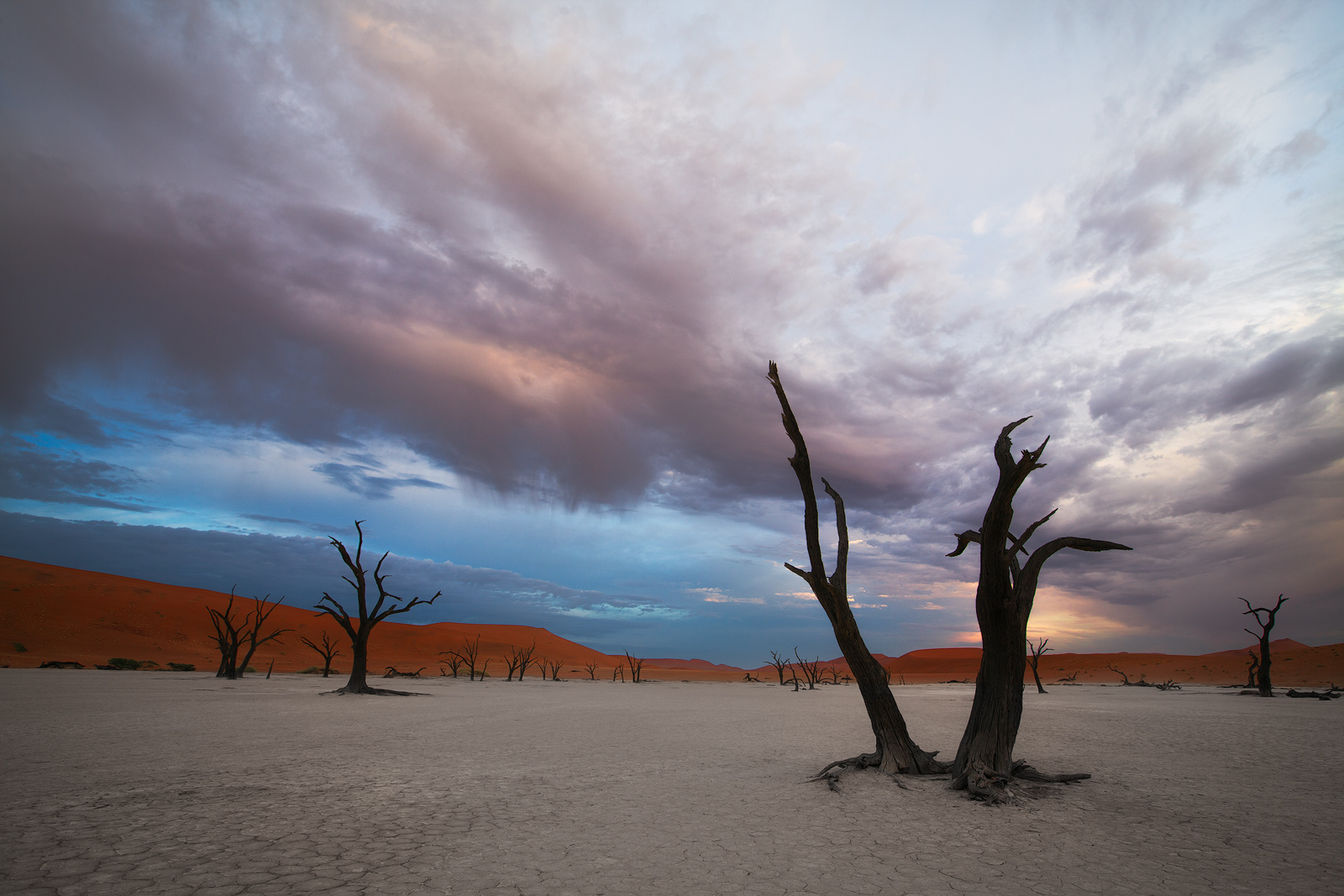 2012, africa, african, dead tree, deadvlei, desert, forest, horizontal, namibia, namibian, sand, tree, photo