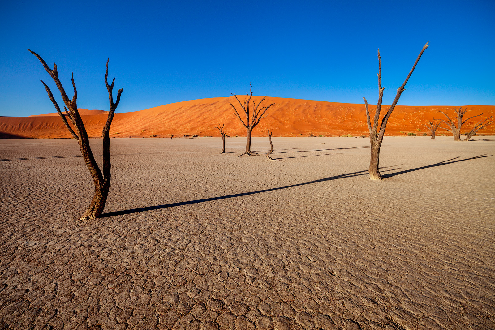 Intense sunlight forms long shadows in Namibia's dead tree forest