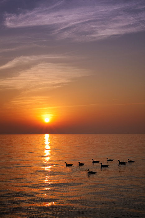 america,beautiful,bird,chicago,day,duck,il,illinois,lake,lake michigan,midwest,north america,skyline,sun,sunrise,sunset,united states,us,usa,vertical, photo