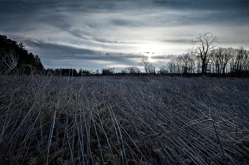 america,horizontal,il,illinois,midwest,morton arboretum,north america,tree,united states,us,usa, photo
