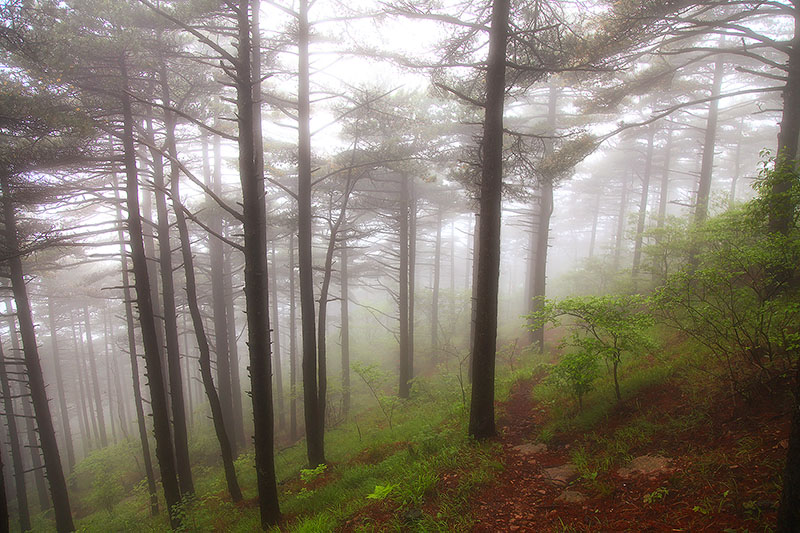 asia,china,fog,foggy,forest,horizontal,huangshan,tree,woods,yellow mountain, photo