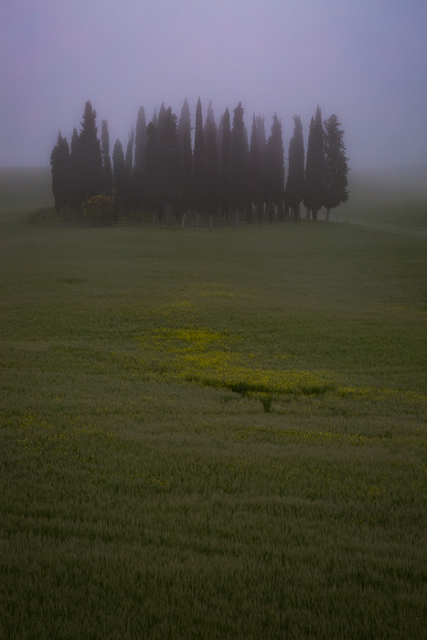 2016,May,SKY,Spring,blue hour,clouds,cyprus,europe,fog,foggy,hills,italy,landscape,mist,misty,morning,portrait,rolling,san quirico d'orcia,sunrise,tree,trees,tuscany,twilight,vertical,wheat fields, photo