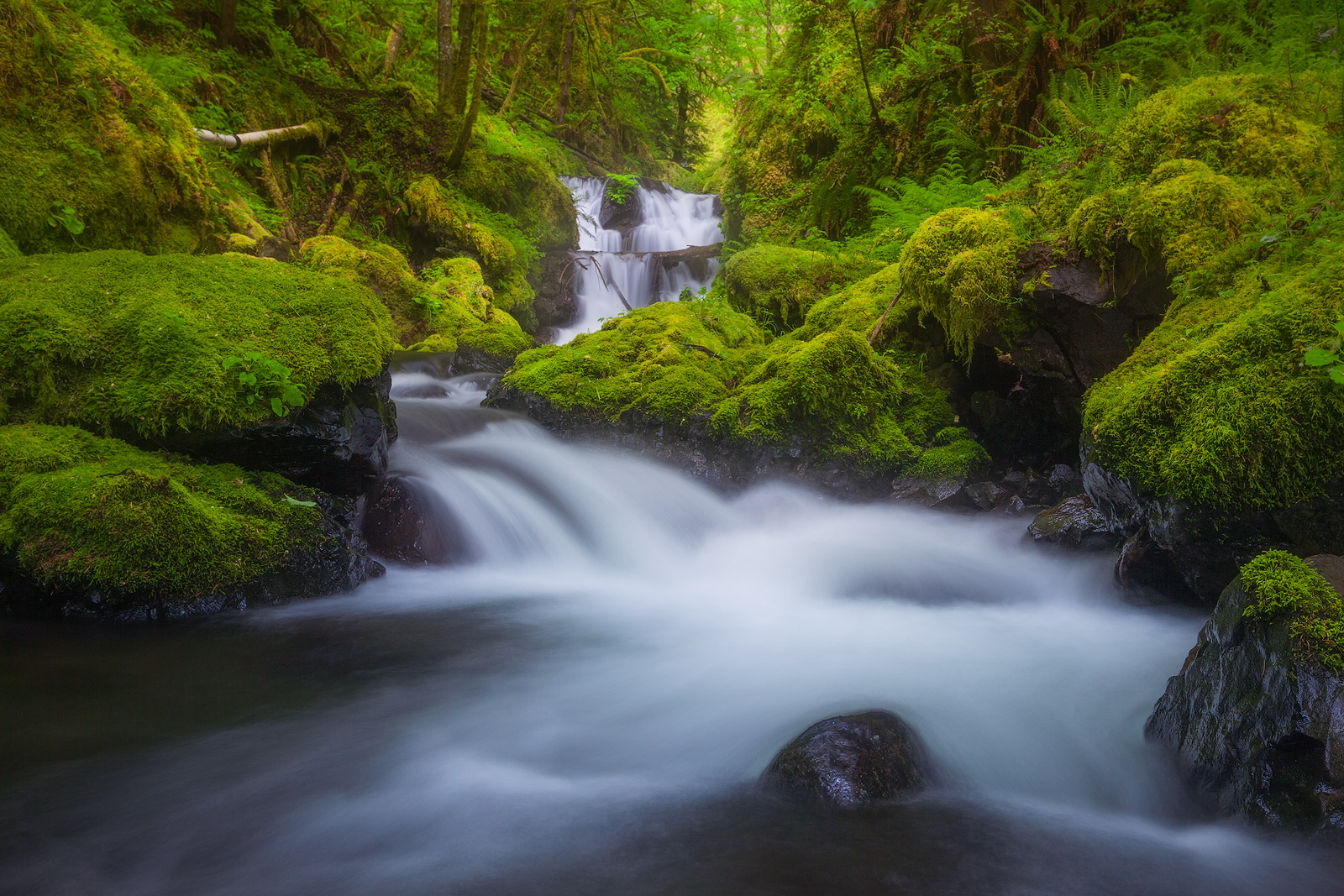 beautiful, columbia river gorge, gorton creek, horizontal, north america, northwest, oregon, pacific northwest, rock, rushing, stream, united states, water body, waterfall, photo