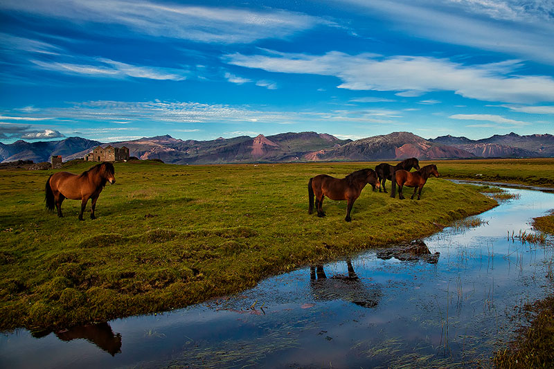 europe,horizontal,horse,iceland,icelandic,mammal, photo