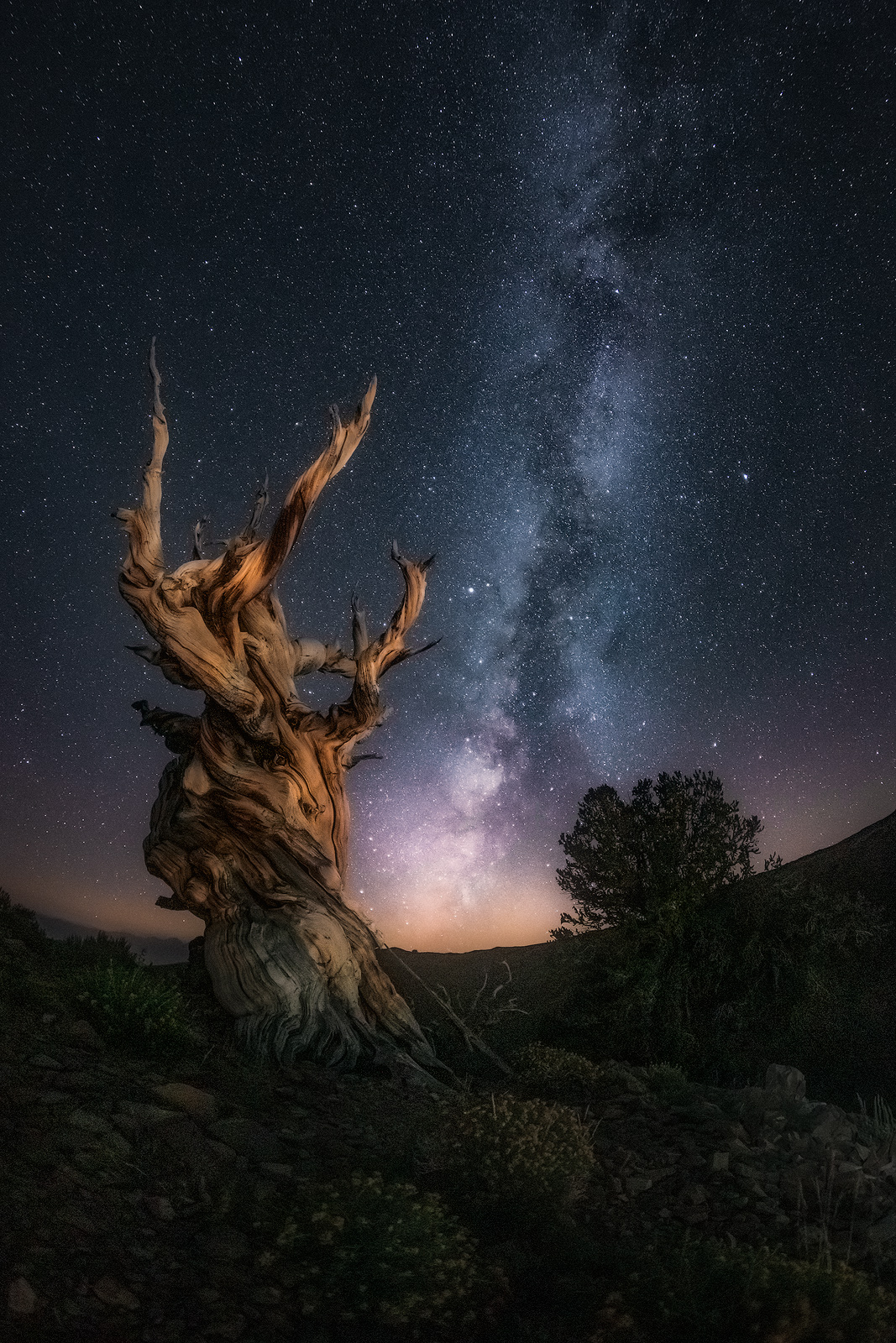 A beautiful Milky Way display behind an ancient twisted tree.