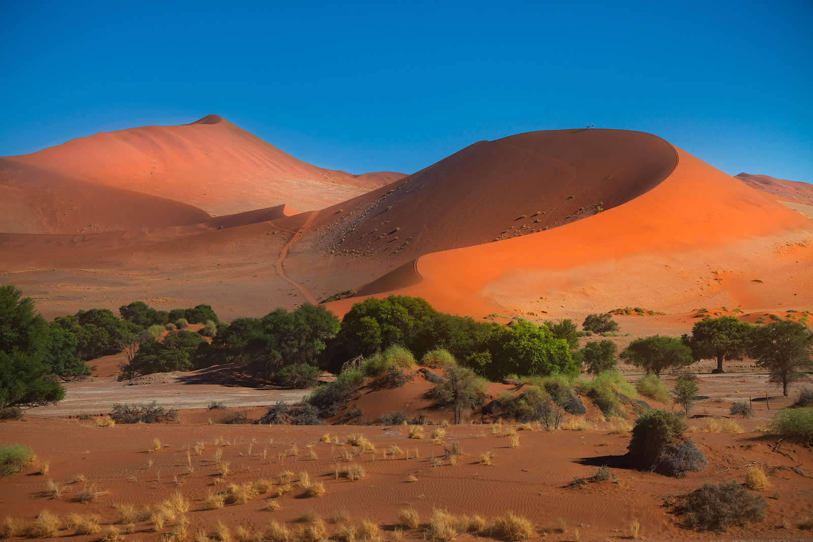 The dune known as Little Mama at Sossusvlei