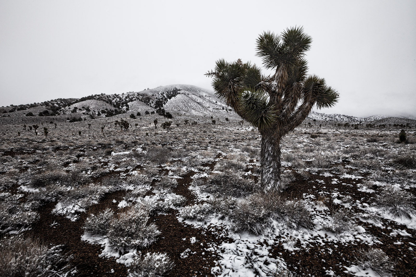 america,cactus,california,death valley,death valley national park,inyo forest,inyo national forest,joshua tree,north america,snow,united states,us,usa,west, photo