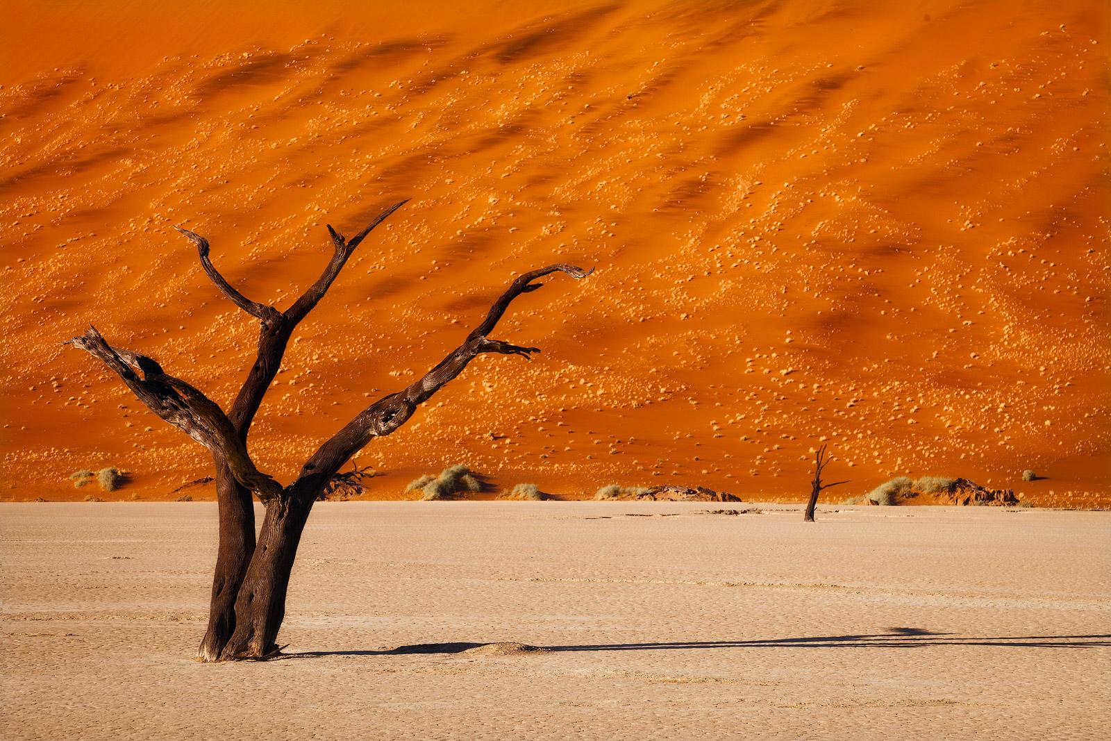Lone dead tree in front of an orange dune