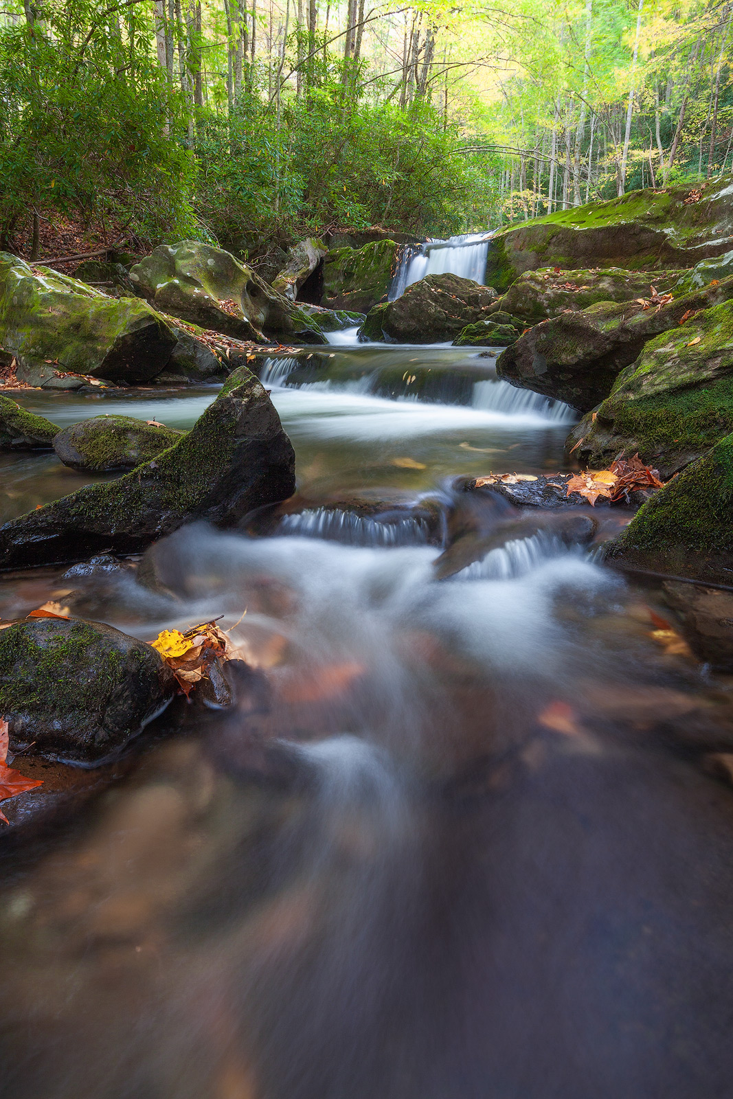 creek,east,great smoky mountains national park,little river,middle prong trail,north america,tennessee,united states,water body, photo