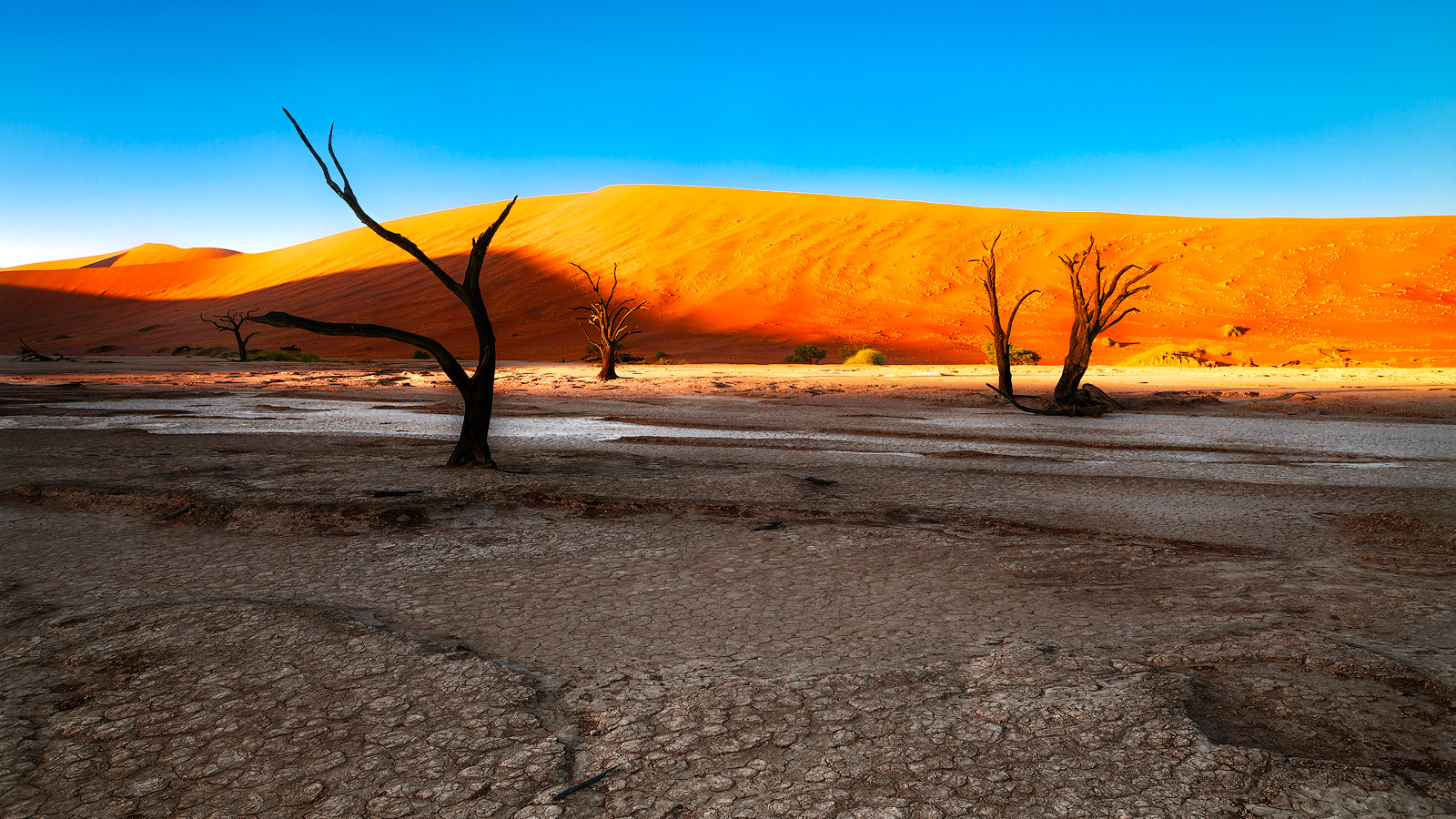 africa,african,dead tree,deadvlei,desert,forest,horizontal,namibia,namibian,sand,tree,woods, photo