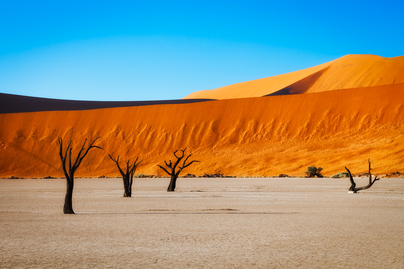 A row of trees create a leading line to the distant orange dunes