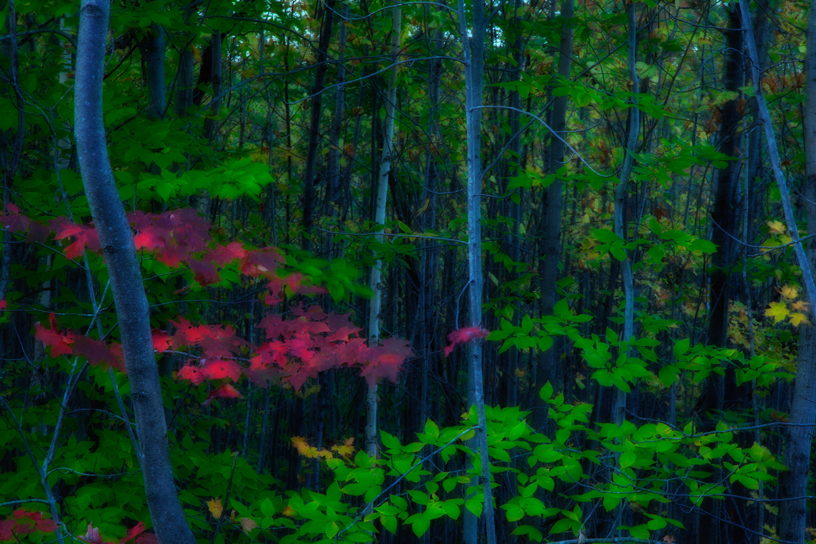 america,east,eastern,forest,green,horizontal,new england,north america,red,tree,united states,us,usa,vermont,woods, photo