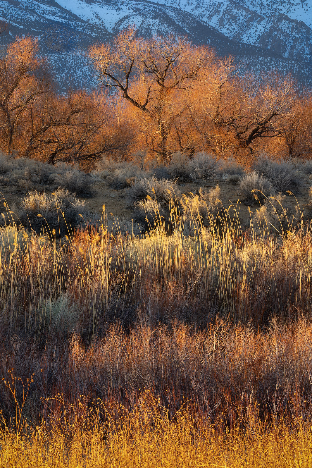 Layers of color and light decorate the foothills of the Sierra Nevadas.