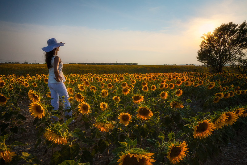europe,female,flower,france,horizontal,lady,looking,southern,sunflower,valensole,woman,yellow, photo