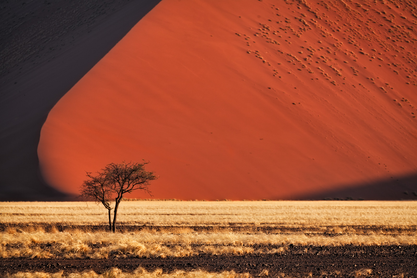 africa,african,desert,dune,horizontal,namibia,namibian,orange,sand, photo
