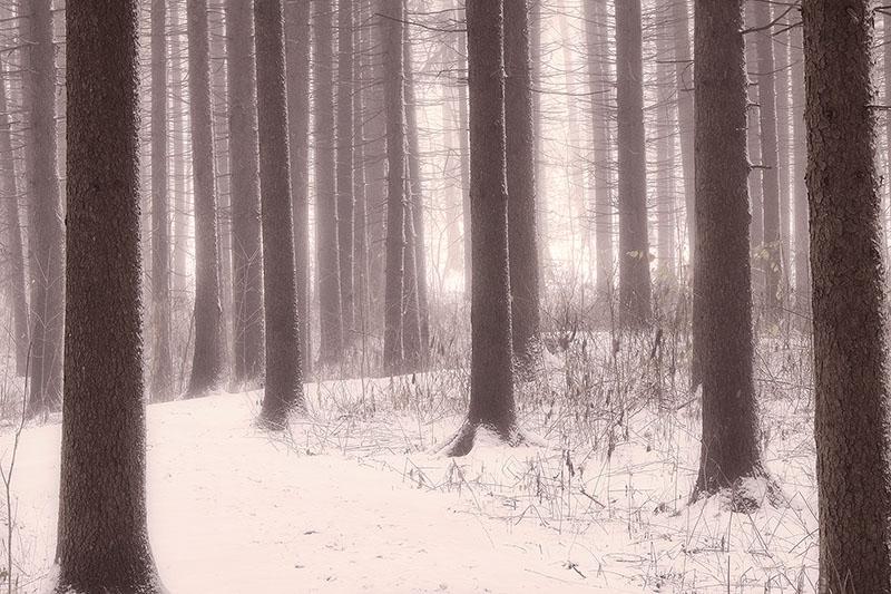 america,horizontal,il,illinois,midwest,morning,morton arboretum,north america,snowy,tree,united states,us,usa,winter, photo