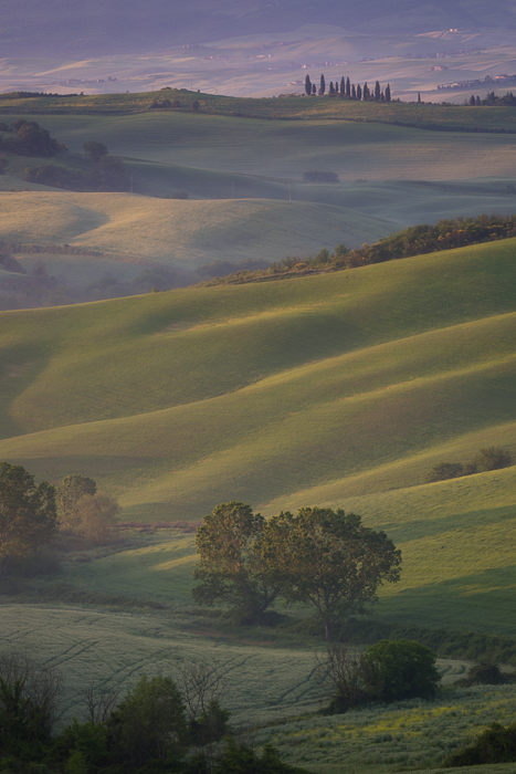 2016,May,Spring,belvedere,cyprus,europe,hills,italy,landscape,morning,podere,portrait,rolling,san quirico,sunrise,tree,trees,tuscany,val d'orcia,val dorcia,vertical,wheat fields, photo