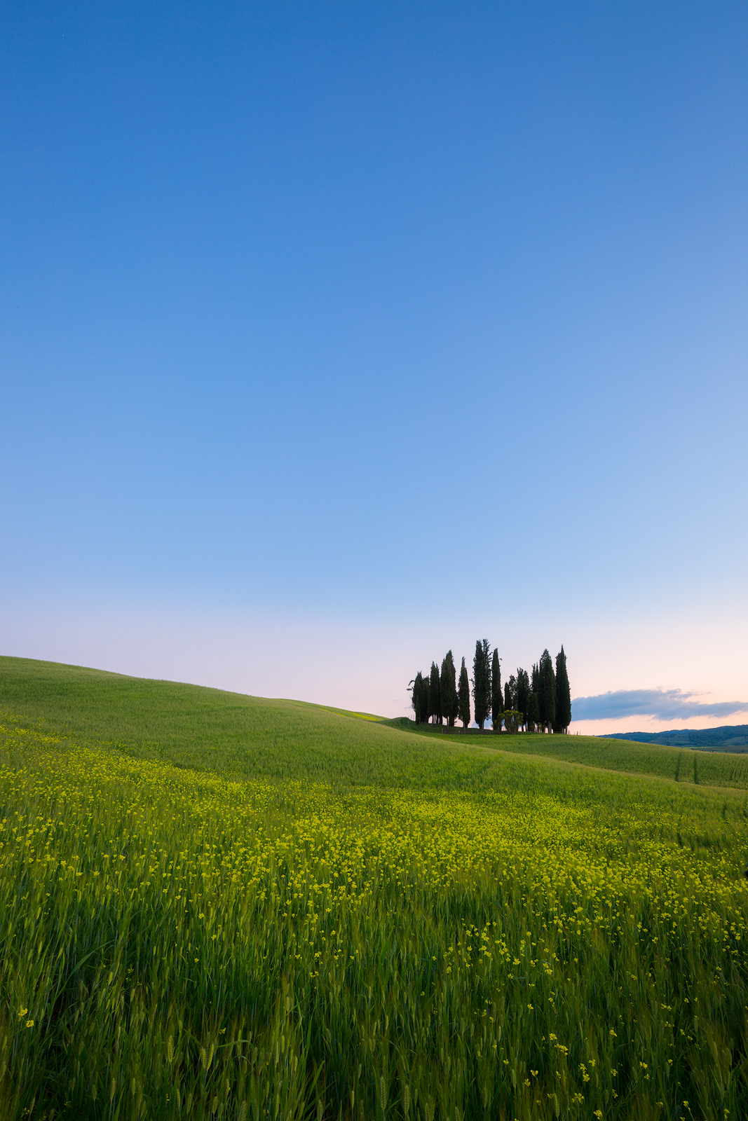 May, Spring, cyprus, europe, evening, hills, italy, landscape, rolling, san quirico d'orcia, trees, tuscany, twilight, vertical, wheat fields, photo