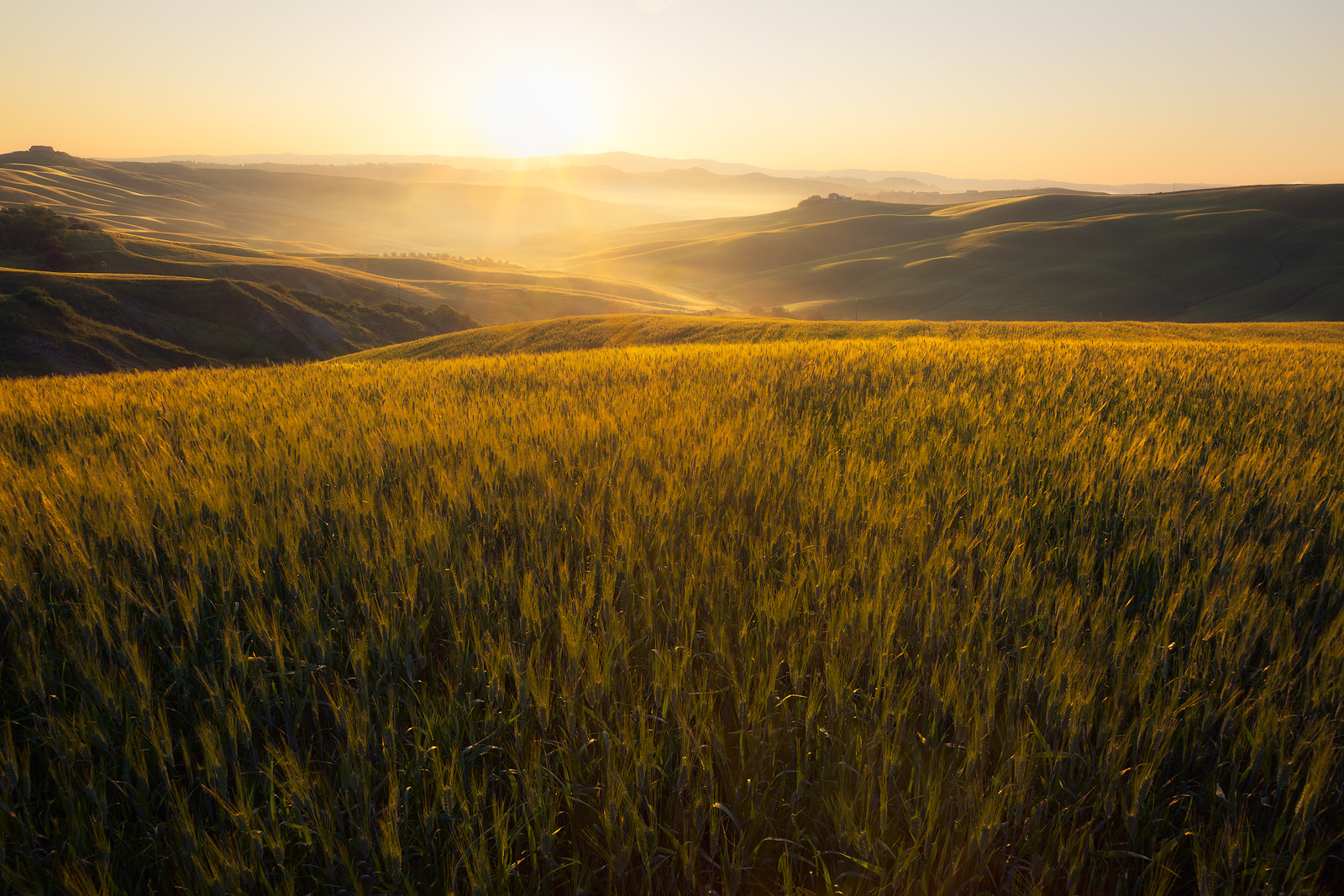 2016,May,Spring,arbia,cyprus,europe,fog,foggy,gold,golden,hills,horizontal,italy,landscape,mist,misty,morning,rolling,siena province,sunrise,tree,trees,tuscany,wheat fields, photo