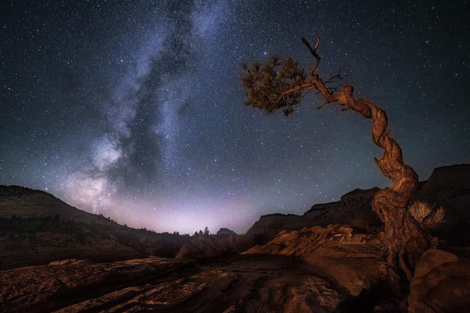 Utah, Night, Milky Way, Twisted, Tree, photo