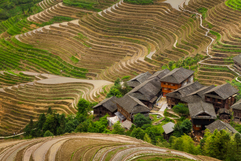 2,asia,china,gold,green,hill,horizontal,longji,longji rice terraces,longji viewpoint 2,longsheng,mountain,planting season,rice terrace,terrace,two,vie, photo