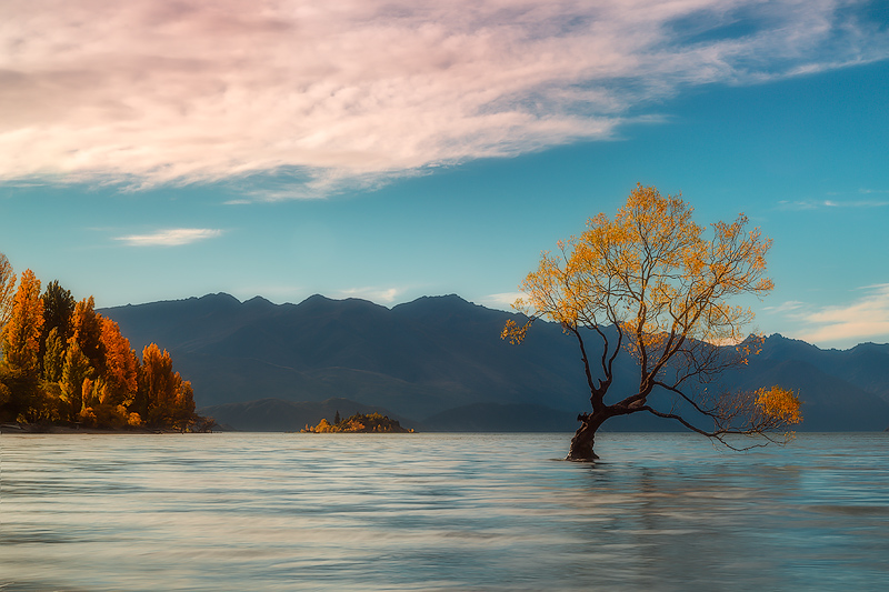 april,evening,fall,south island,sunset,trees,wanaka,wanaka lake, photo