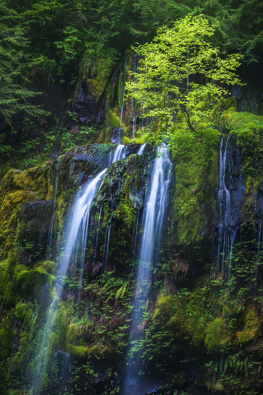 beautiful, columbia river gorge, landscape, long exposure, north america, northwest, oregon, pacific northwest, panther creek, panther creek falls, united states, vertical, water body, waterfall, photo