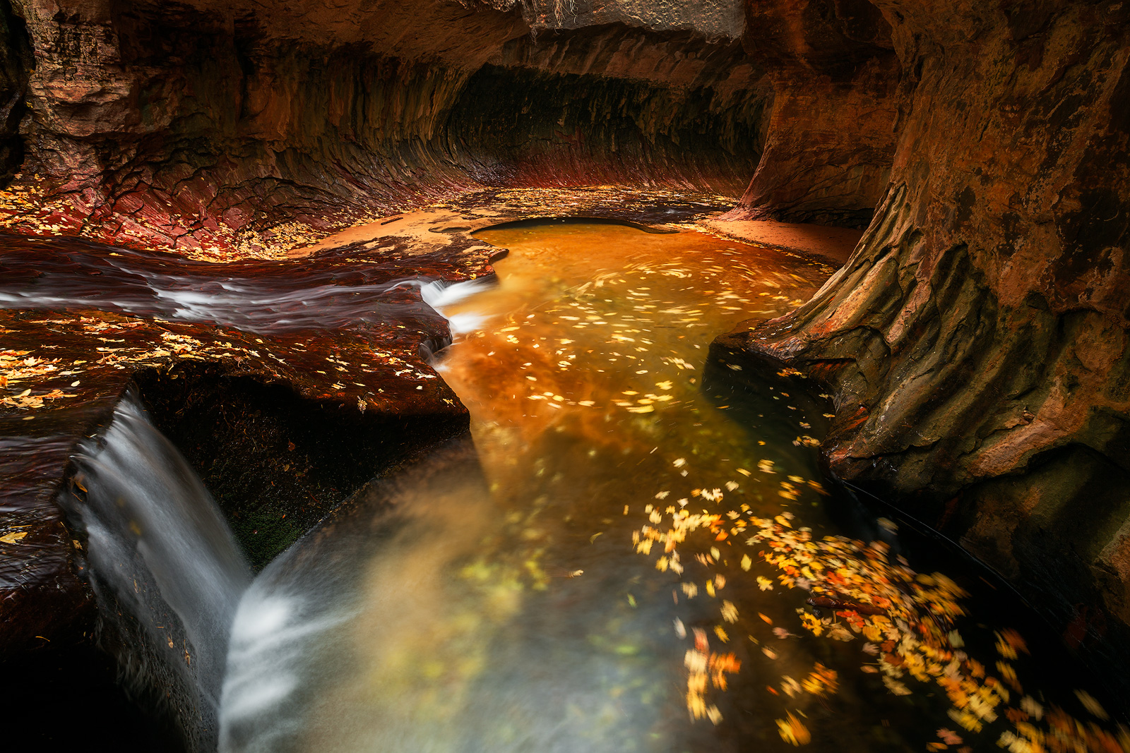 america,autumn,colors,fall,foliage,horizontal,leaf,leaves,left fork,left fork at north creek,left fork of north creek,north america,southwest,subway,swirling,the subway,united states,us,usa,utah,zion , photo